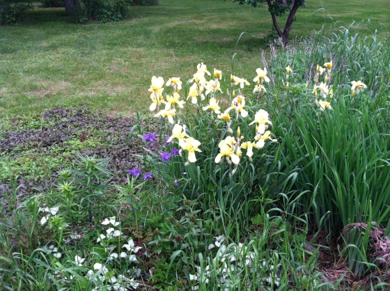 Iris and Crabgrass