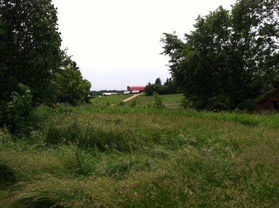 View of Neighbor